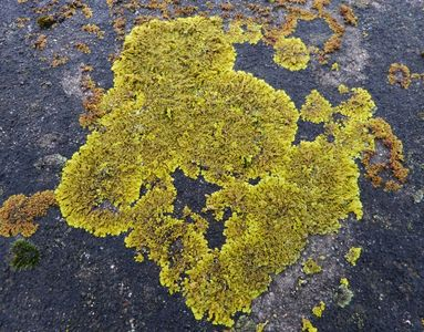 "01.01.2021  Aus der Serie ""Winterfarben"": Flechte auf Beton / From the series ""winter colours"": Lichen on concrete Matthias Harnisch * Kunst & Natur"