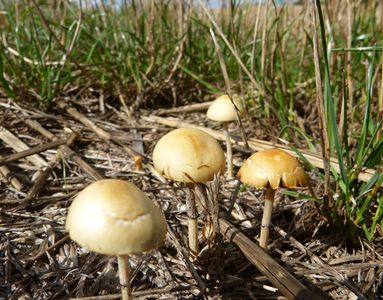 25.08.2020  ...und erste Pilze am Feldrand / ...and first mushrooms at the field margin Matthias Harnisch * Kunst & Natur